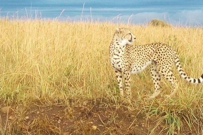 20-Day Maasai, Uganda gorilla and Tanzania Serengeti and Zanzibar beach safari