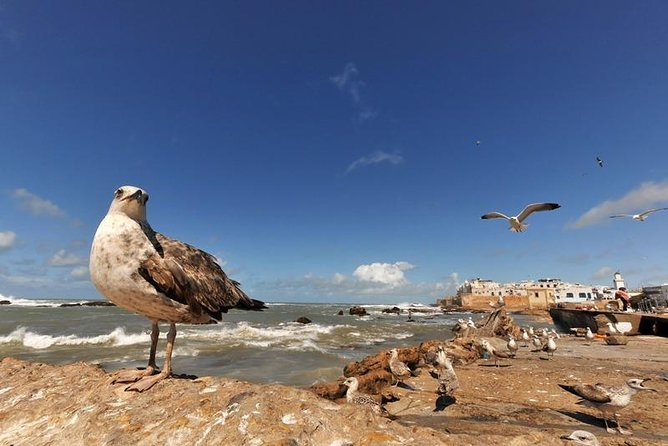 Essaouira Day Trip from Marrakech with Local Guide