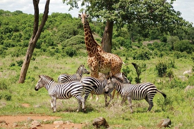 Full-Day Private Tour to Africa Park from Cairo with Lunch