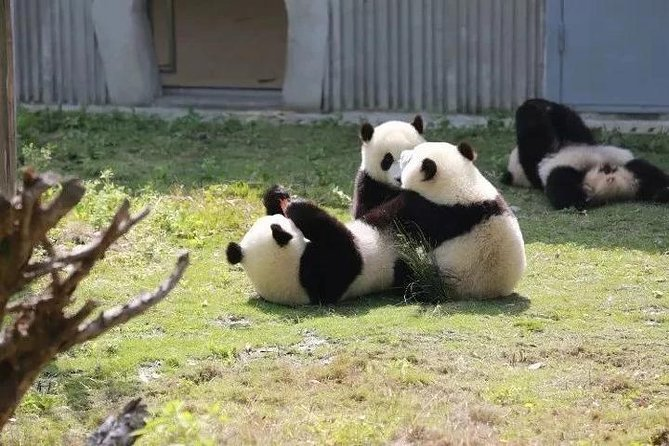 Wolong Panda Nature Reserve Volunteer Program