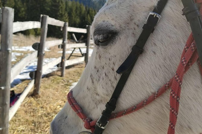 Private 2-Day Horse Riding Trip in Rila from Sofia