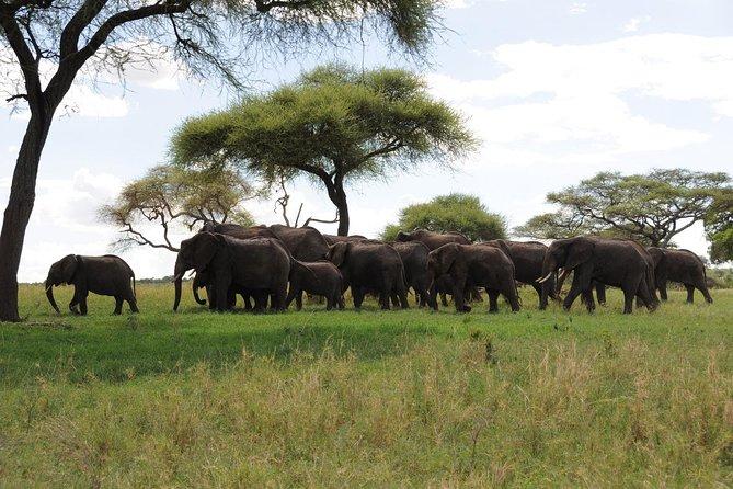 3-Day Camping Safari from Arusha with Tarangire and Ngorongoro