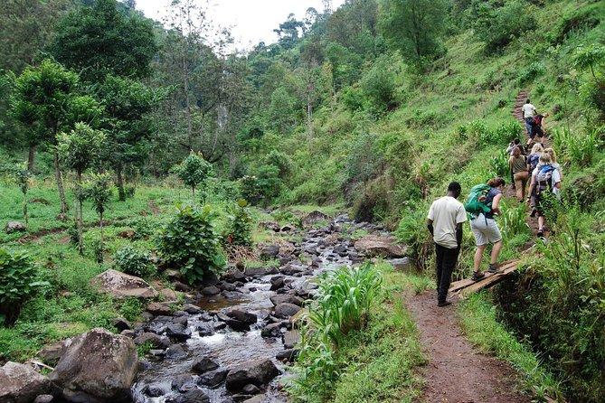 Materuni Waterfalls and Coffee tour