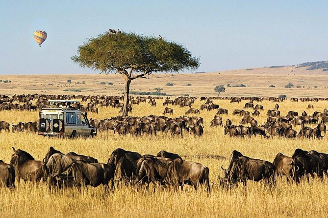 5 Day Safari from Maasai Mara, L.Baringo & L. Bogoria National Reserve