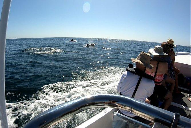 Bottlenose Dolphins Outside