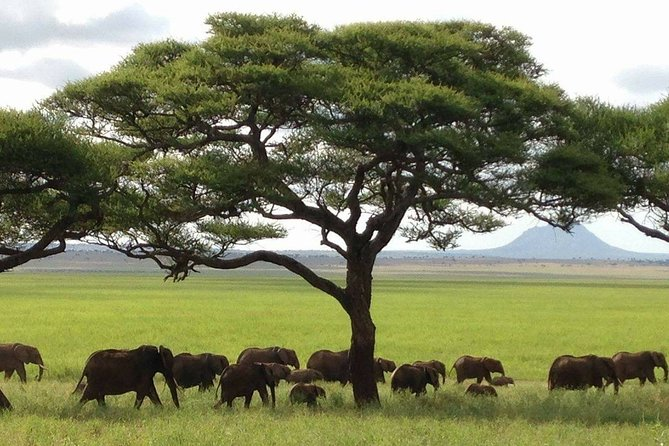 6 Days Camping Safari To Lake Manyara / Tarangire, Serengeti & Ngorongoro.