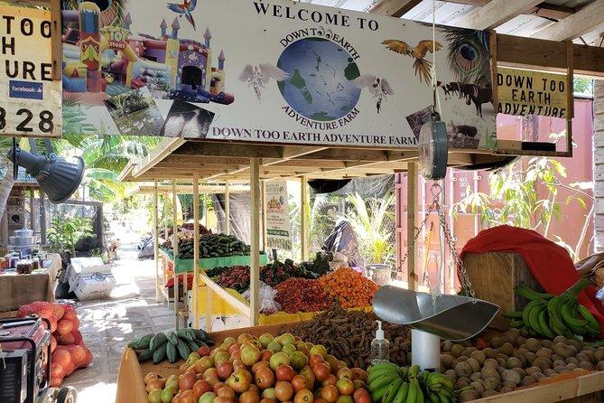 Explore Nassau City Tours