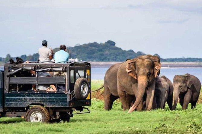 Full-Day Minneriya and Kaudulla National Parks Private Safari