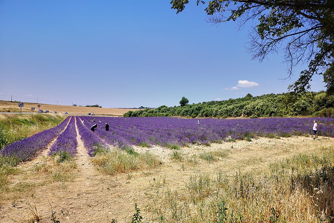 Marseille Shore Excursion: Private Day Trip to Manosque, Valensole, Moustiers Ste Marie and Lake Ste Croix