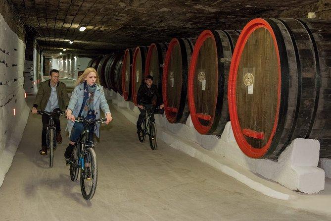 Biking a Guinness Book Winery