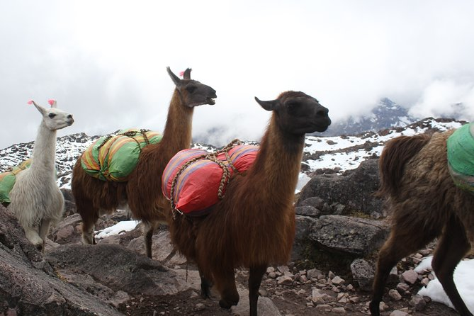 Lares Trek to Machu Picchu (5 Days)