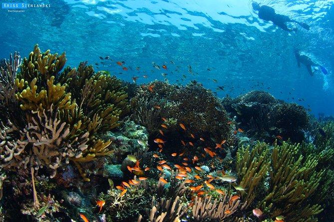 Snorkeling in Menjangan Marine Park - Discover abundant marine life of Pemuteran