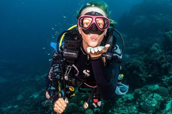 5 Fun Dives in Pemuteran (for certified divers) - Exploration in Menjangan Park