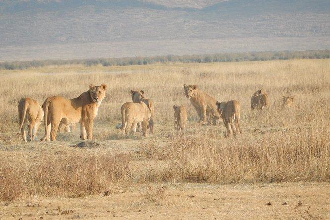 Safari Tanzania Experience 2020