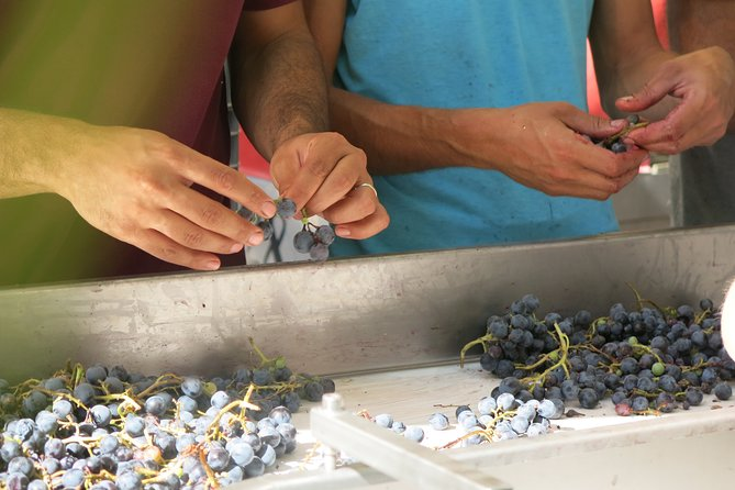 Mondays - Beyond The Grape: Explore With A Local - Troodos Mountains thru Wine!