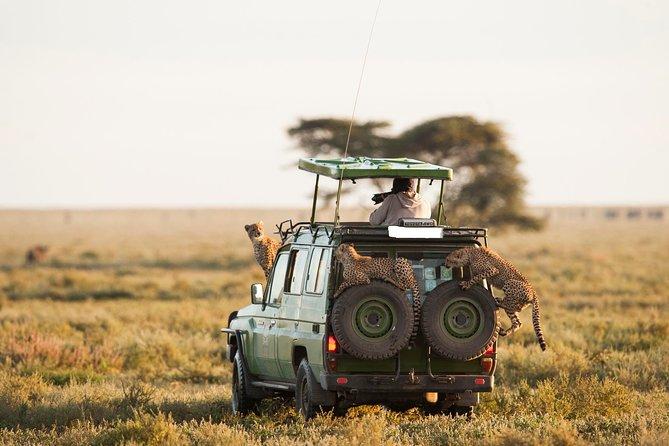 10-Day Spectacular Big 5 Wildlife Safari and Beach Holiday