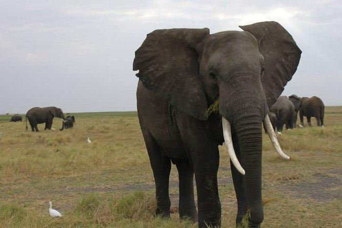 11Day WILDERNESS TRAIL:Okavango,Moremi&Chobe -WildCamping Safari +Victoria Falls