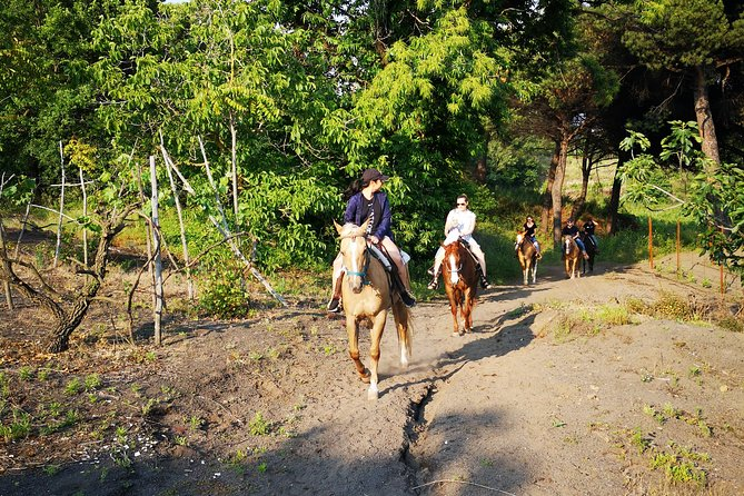 Herculaneum, Horses & Wine