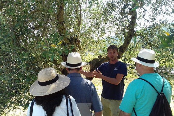 Vicopisano & extra virgin olive oil tour