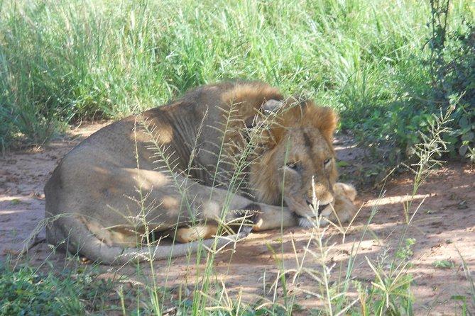 Travel Agency in Uganda that specialises in Uganda and Rwanda safaris