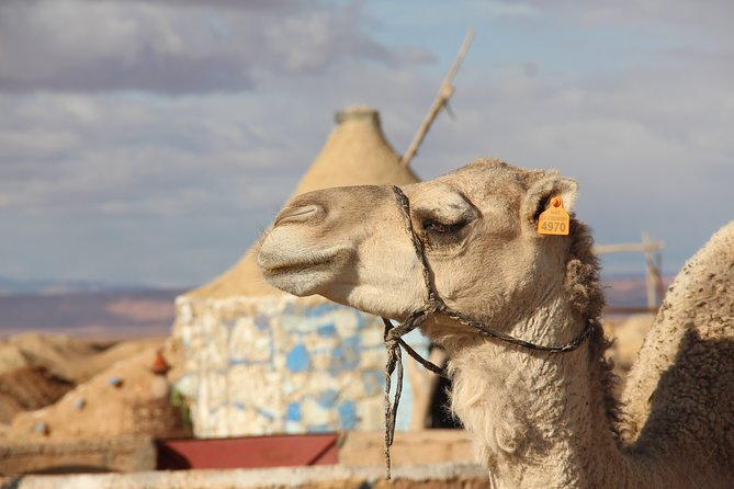 3 Days Trip: Valleys of Southeast Morocco & Erg Chebbi From Marrakech