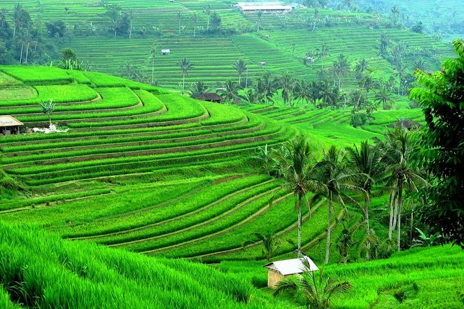 Full-Day Bali Car Charter to Exploring Tour in Ulun Danu, Jatiluwih & Tanah Lot
