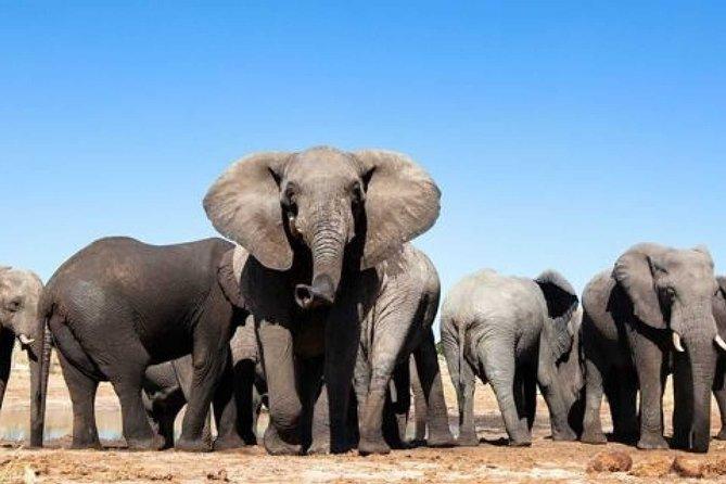 Cape Town - Winelands - Garden Route - Addo Elephants: (6 Days)