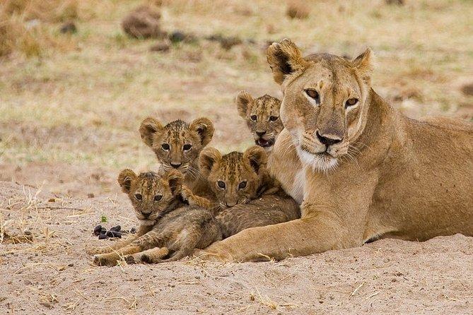 The Ultimate Safari in Tanzania