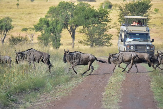 Serengeti Migration Safari (5 days) + Zanzibar Tour (4 days)