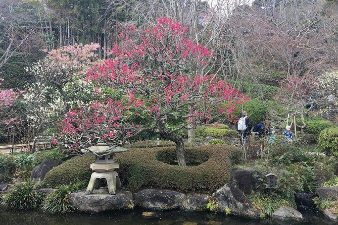 Kamakura flower tour