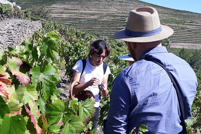 Hiking Tour at Douro Valley, with Picnic and wine tasting