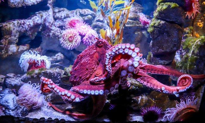 New England Aquarium: Live Q&A and Online Activities