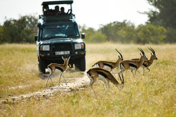 2 Days Amboseli Luxury Safari by Jeep