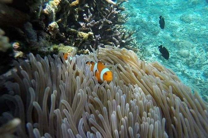 Blue Lagoon Bali snorkling