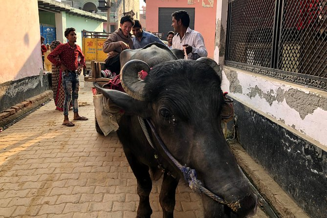 1 Day Village Homestay from Delhi - Curry Cooking Class & Cow Taxi Experience