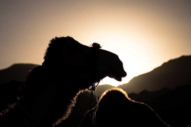 Agafay Desert sunset dinner and camel ride - Half Day - shared group (8 pers)
