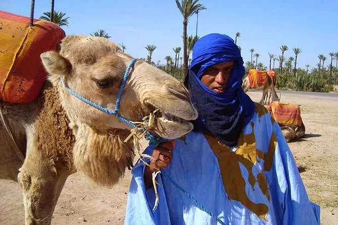 Sunset Camel Ride in the Palmeraie Oasis - private tour