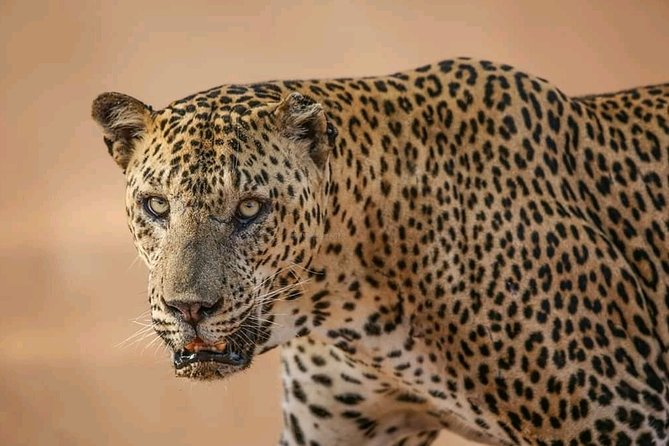 Yala National Park 5 hours morning safari