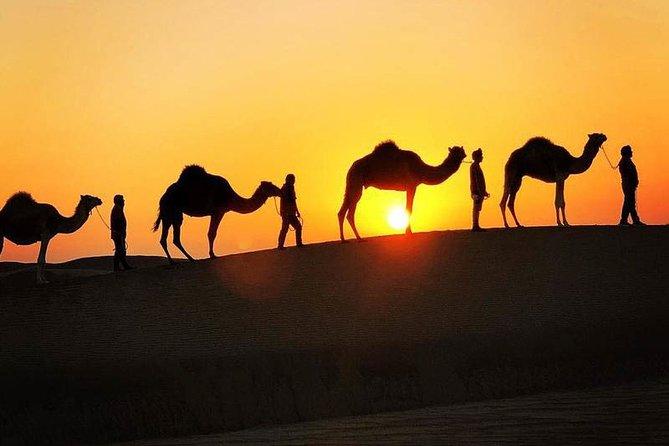 Bedouin Adventure: Dromedaries in the Desert