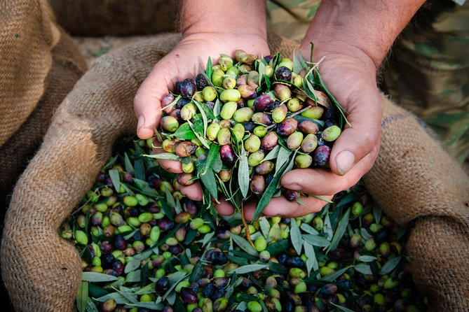 Extra Virgin Olive Oil Tour with Lunch in Umbria