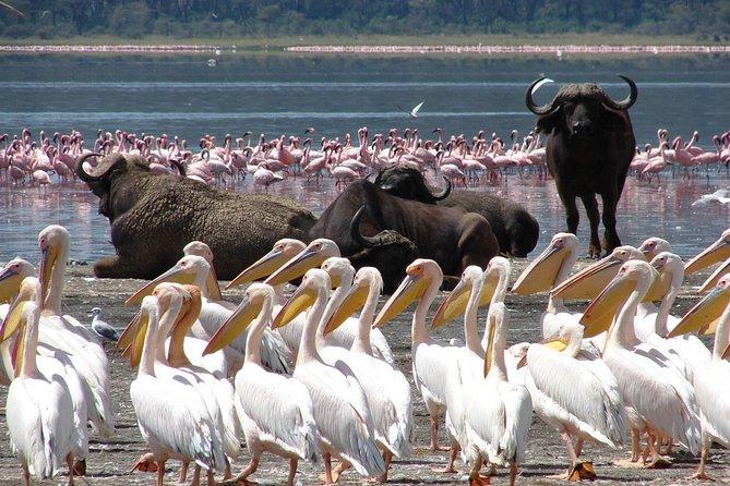 Day Tour : Lake Nakuru National Park & Boat Ride at Lake Naivasha