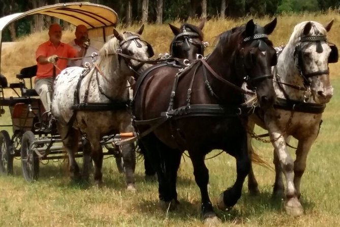 Carriage ride and private Chianti wine Tasting immmersed in the Tuscan nature