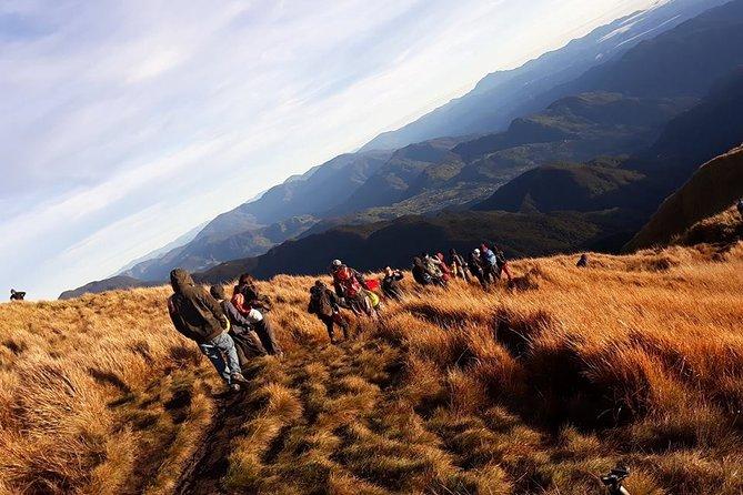 Mount Pulag Hike