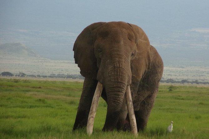 4 Days Masai Mara Lake Naivasha Safari