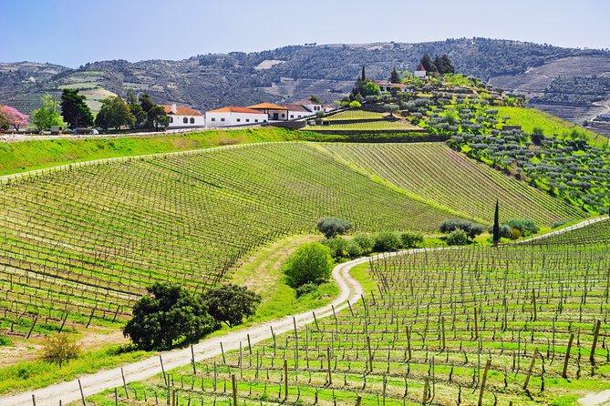 Douro Valley private day tour from Porto