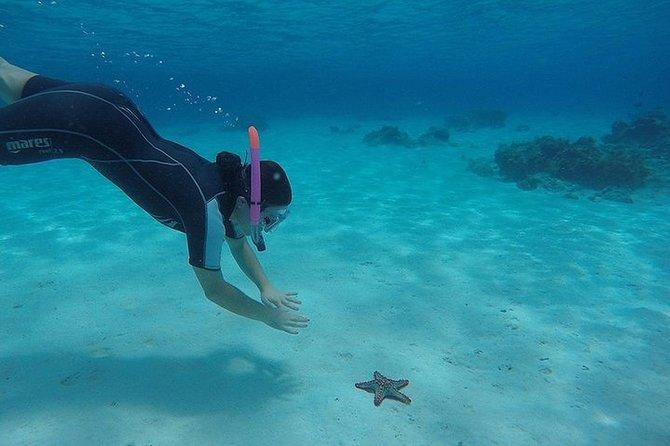 3-Days Zanzibar: Stone Town, Dolphins, Snorkeling at Mnemba reef and Spice Farm