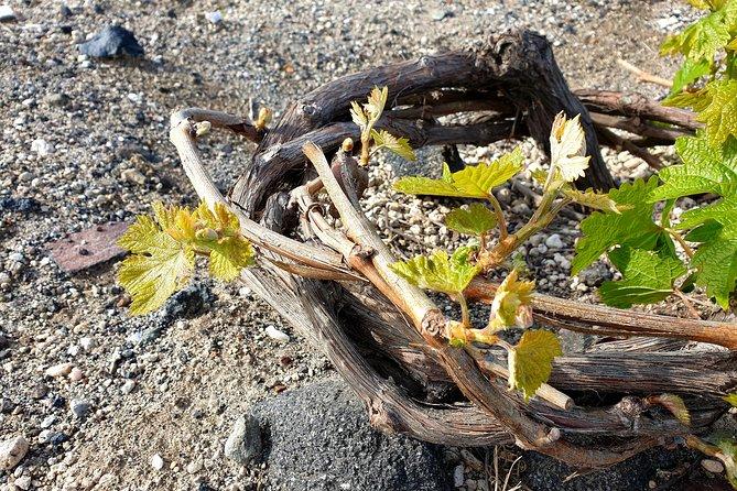 Santorini Virtual Wine Stories - Live Experience