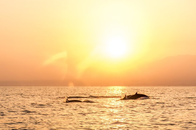 Bali Dolphin Watching & Sunrise at Lovina Beach Private Tour – Full Day