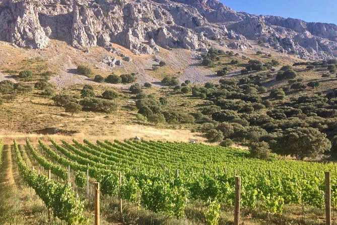 VIP Wine Tour through the Guadalhorce Valley & Wolf Sanctuary Visit