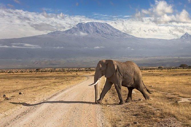 Сафари в парках Тарангире, Серенгети, Нгоронгоро, Маньяра, Килиманджаро 7дн/6ноч